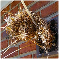 Birds Nest Removal